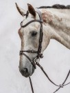 Ps of sweden hve bridle thumbnail