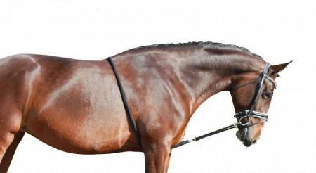 Longering/ Horsemanship